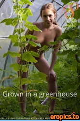 Stunning18 Kelly P - Grown in a greenhouse - 93 Photos - Jun 21, 2021